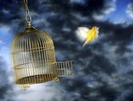 6º Concurso Vida Bancária de Fotografia vai abordar tema 'Pássaros livres'